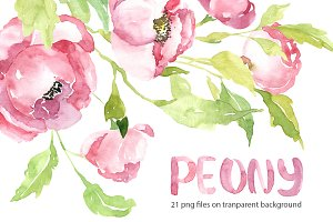 Pink watercolor peony PNG set