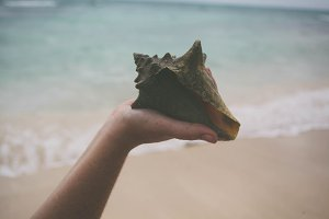 Shell in Hand