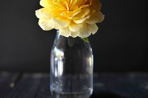 Bright yellow flower in dark room