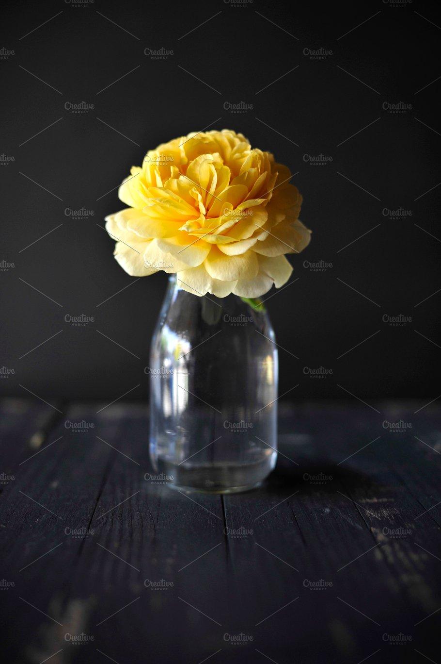 Bright yellow flower in dark room nature photos creative market bright yellow flower in dark room nature mightylinksfo
