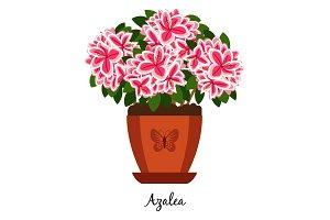 Azalea plant in pot icon
