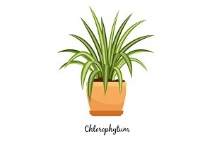 Clorofitum plant in pot icon