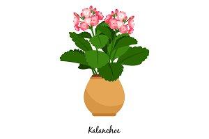 Kalanchoe plant in pot