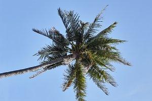 palm tree background blue clear sky