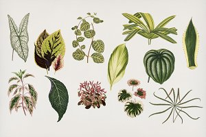 Leaves collection hand drawn (PSD)