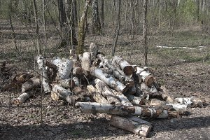Stack of wood in a forest
