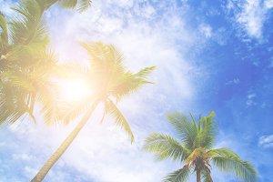 plam tree on beach