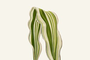 Illustration Beautiful Leaved Plant