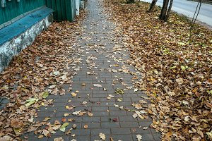 Autumn in the city, brown leaves in autumn in November, House with a road.