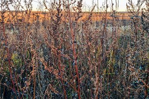 Dry grass in November, in autumn in the park.