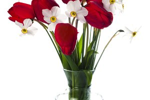Red tulips and white narcissuses in vase