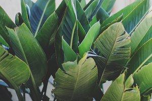 Large Tropical Leaves Closeup
