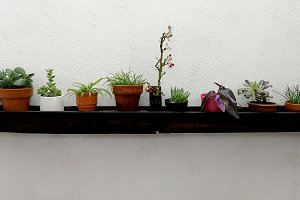 Flower pots on wooden shelf