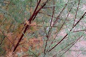 Colored bush autumn foliage