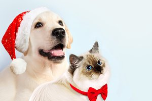 Cat and dog together. Christmas mood