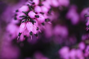 Romantic background with purple flowers