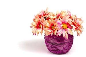Pink daisy on purple vase