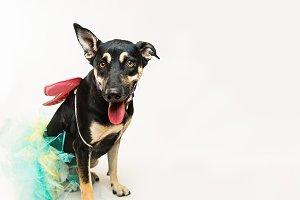 Silly dog in a tutu