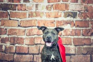 Happy Hero Dog
