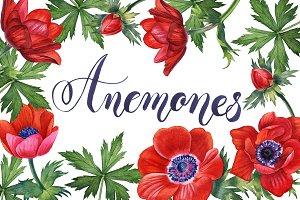 Anemones set