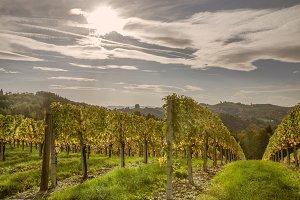 Wineyards / Austria