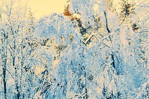 Winter forest in snow and ice