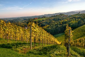 Winehills/ Austria