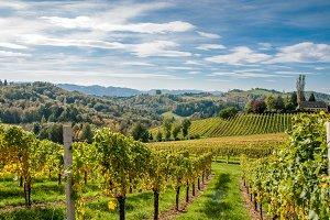 Grapes / vinehills / walking