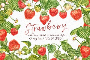 Strawberry illustrations