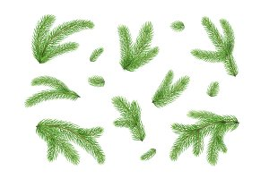 Fir branches. Christmas tree, pine needles isolated on white background