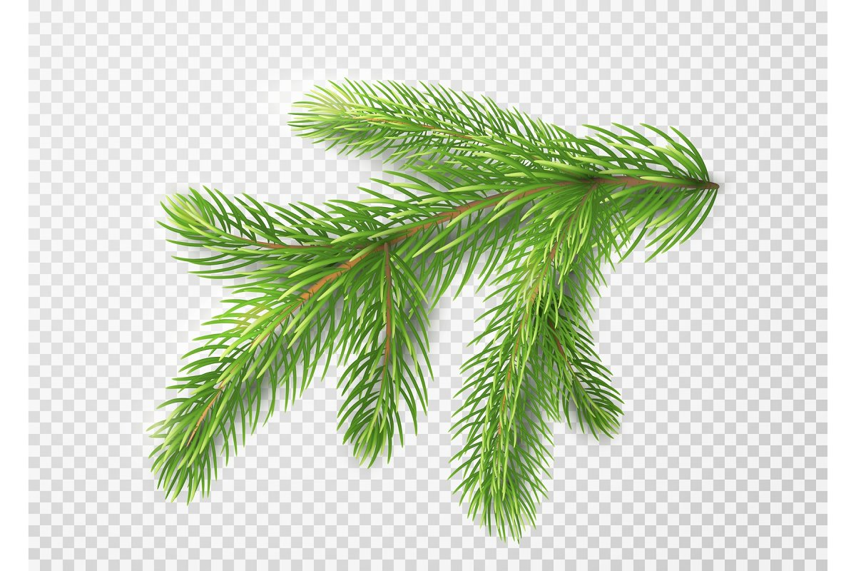 Fir Branch Christmas Tree Pine Needles Isolated On Transparent Background