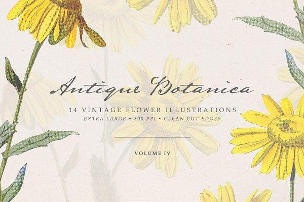 Vintge Flowers Vol.04 - Extra Large