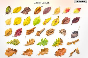 Autumn Leaves -Png Elements & Scenes