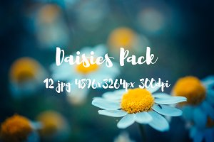 Daisies Pack