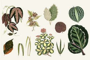 Illustration of Leaved Plant
