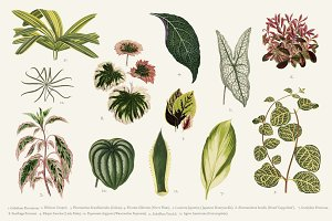 Illustration of Leaved Plant