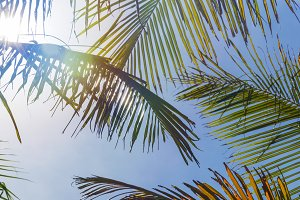 Perfect green palm leaves in front of sky