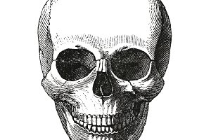 Antique skull print (PSD)