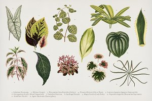 Vintage plants illustration