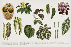 Vintage plants illustration