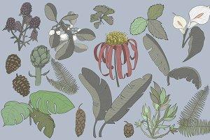 Botanical Design Vector
