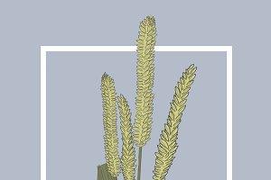 Ear of Rice Vector Illustration