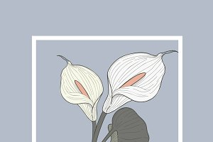 Anthurium Floral Vector