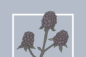 Blackberry Fruit Illustration