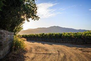 A Napa Valley vineyard at sunset