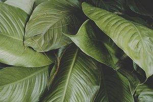 Closeup green foliage