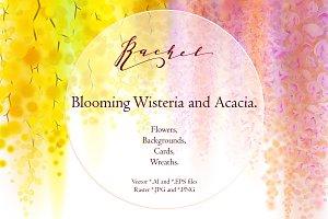 Rachel. Wisteria and Acacia