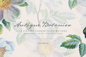 Vintage Flowers Vol.03 - Extra Large