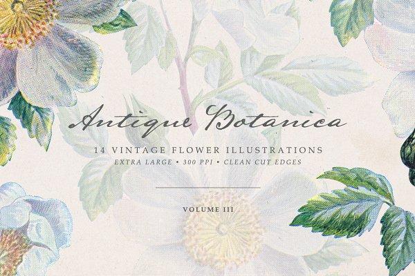 Vintage Flowers Vol.03 - Extra Larg…