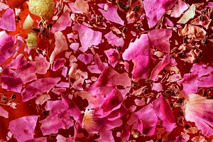Glass with rose water and petals